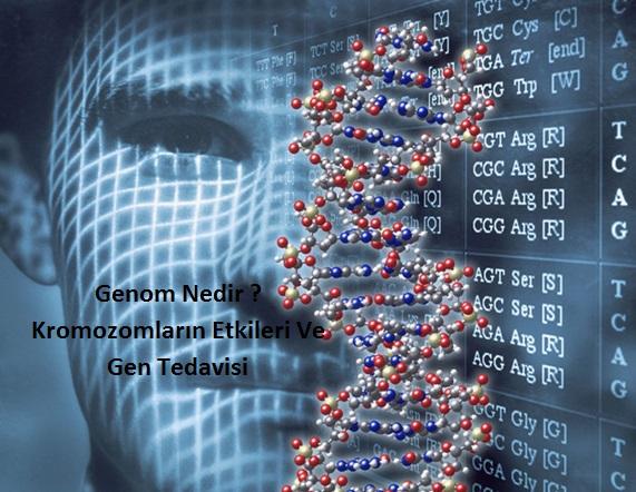 Genom Nedir ? Kromozomların Etkileri Ve Gen Tedavisi